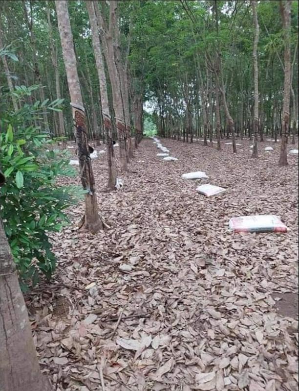 Bán đất có cao su xã Thanh Lương giá 4,1tỷ dt 2,4ha